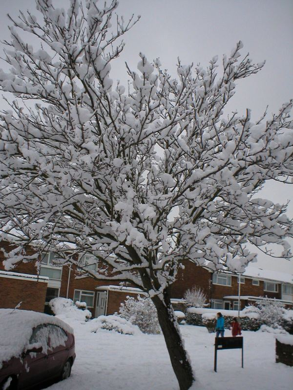 The s#uksnow piled up on everything, including this tree.
