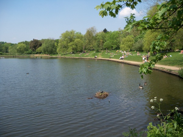 The still waters of one of Highgate's ponds