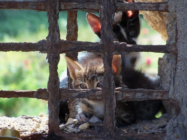 A cute pair of kittens living in the grounds around the old town in Rhodes