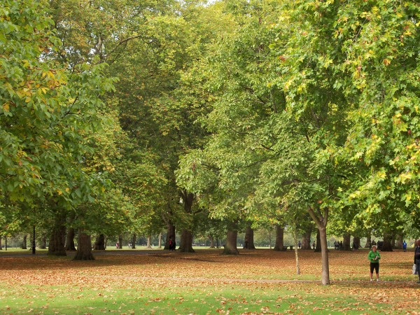 The autumn trees in Hyde Park on the day of the Royal Parks Foundation Half-marathon